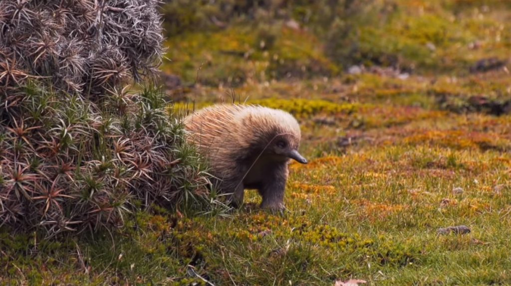 Orvis-Moment-of-Chill-Tasmanian-Spines